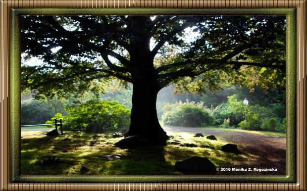 frame-1905689_tree-frame