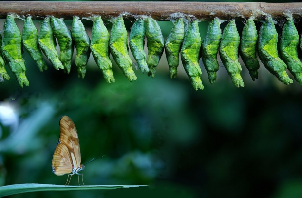 cocoon-209096_1920